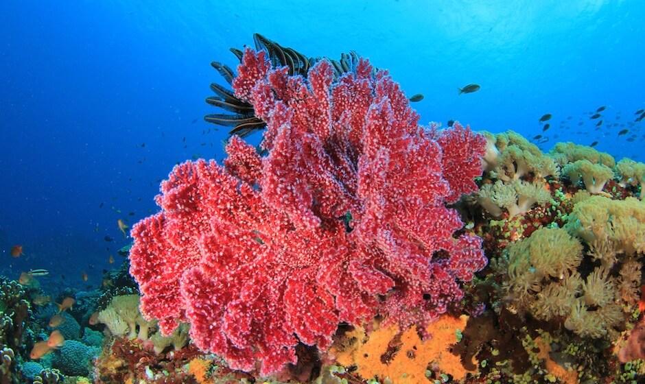 Coral reef Mauritius