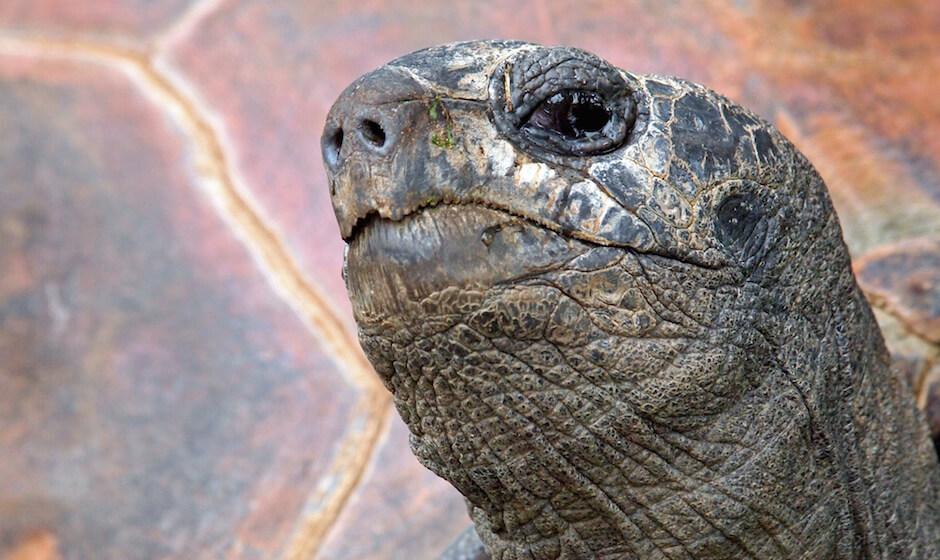 tortoise balfour gardens