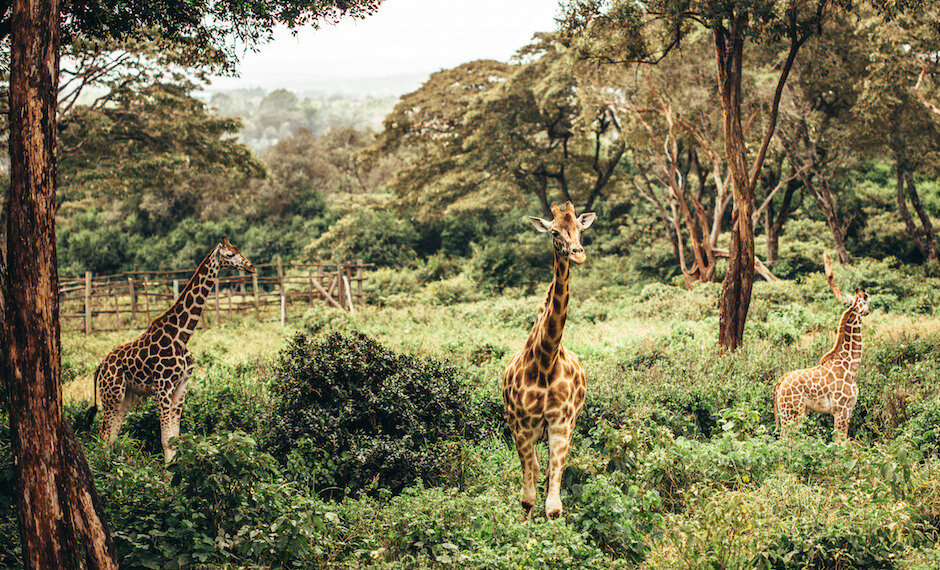 The Nairobi National Park is one of Nairobe's main attractions